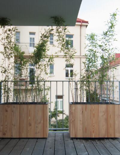 Do 2 lety vytvoří bambus v truhlíku nepropustnou zástěnu